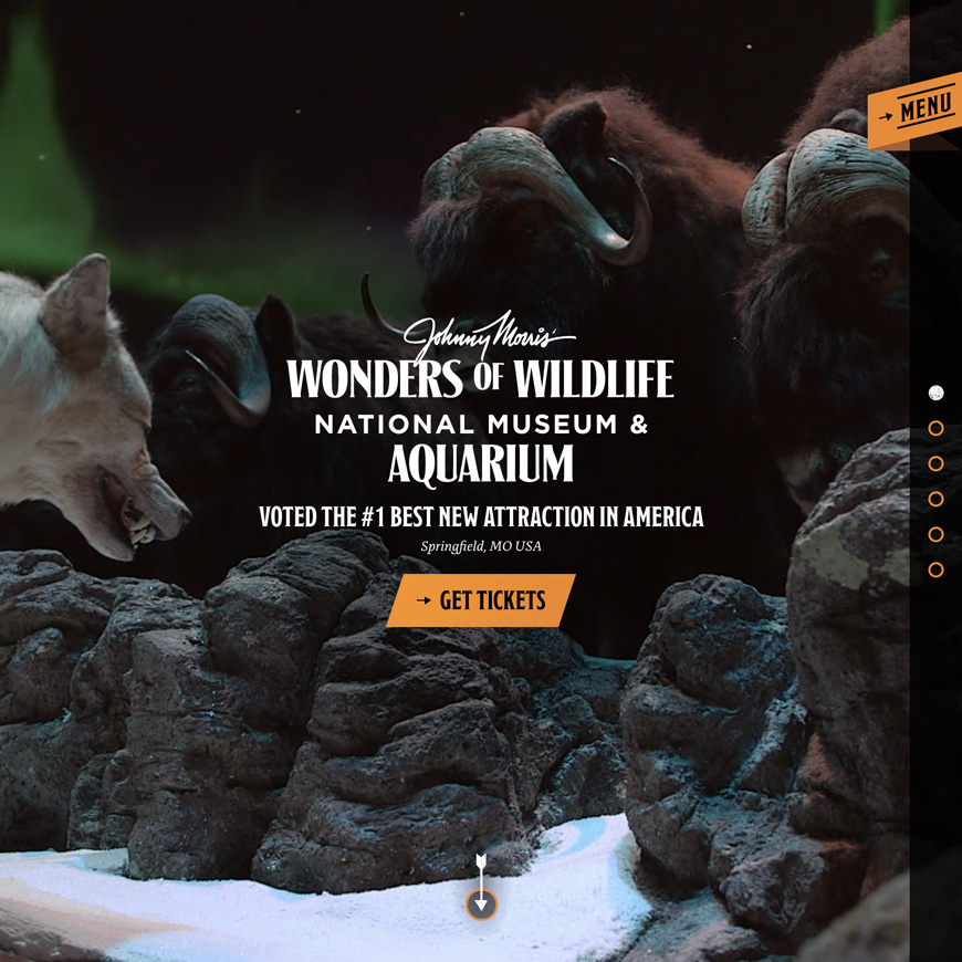 Image associated with Wonders of Wildlife
